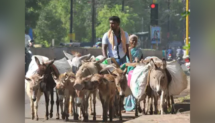 Illegal donkey meat sales on the rise in Andhra Pradesh